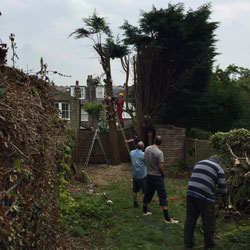 A DIY Dad (pictured in the red boiler suit) removing some leylandii trees!