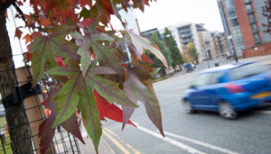 City of Trees is expecting to plant at least three million trees in Greater Manchester over the next 25 years.