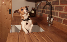 Not just a cute dog.  Also a fantastic oak worktop cut to size with drainage grooves.