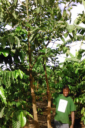 A local farmer with avocado and coffee