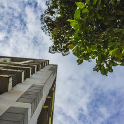 A photo looking upwards at a concrete building next to a leafy tree