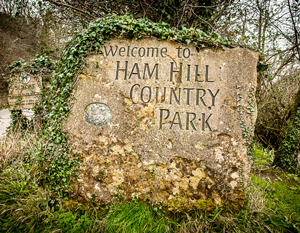 Tree Planting at Ham Hill Country Park
