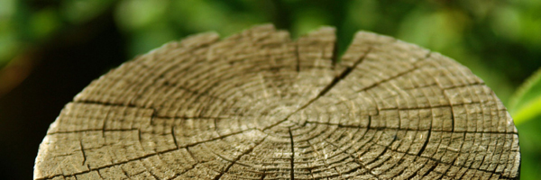 How moisture affects wood