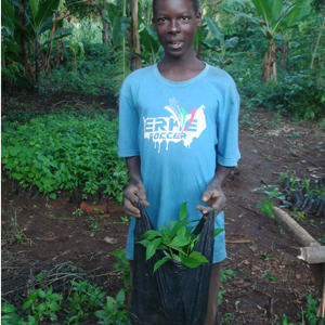 Moses Wakida collecting seedlings to be planted at Kadenge Community Nursery Bed