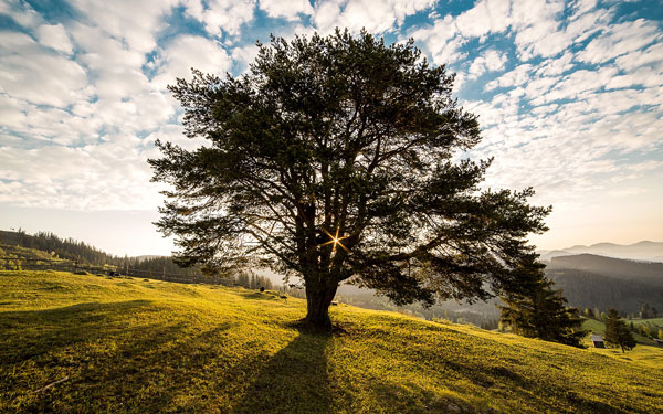 This tree is a stunning addition to the landscape in this image